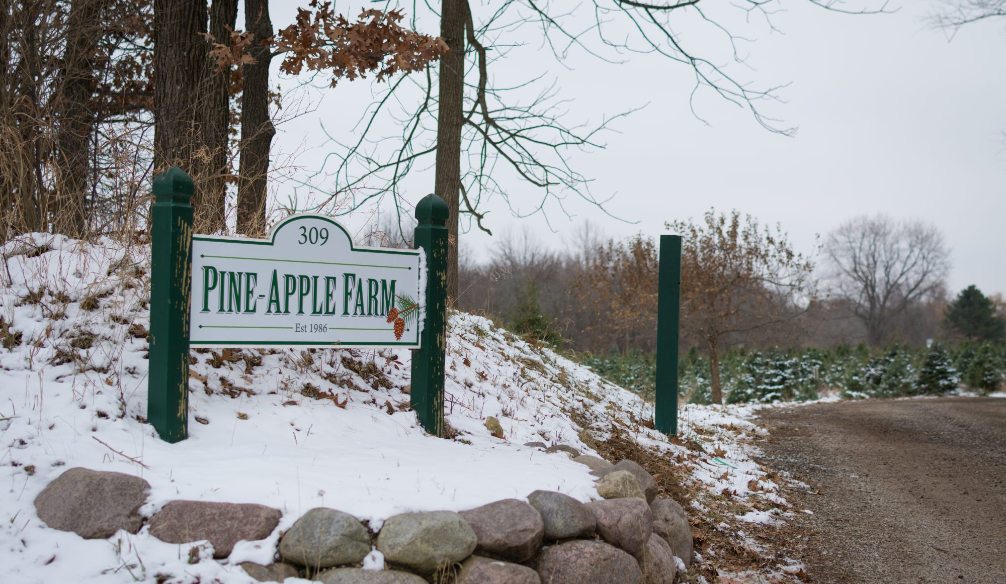 Pine-Apple Farm